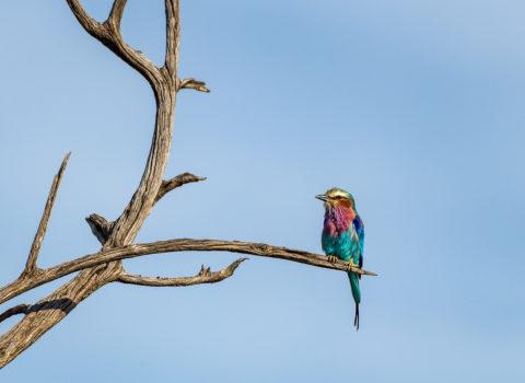 Kenya – Birds